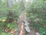 The trail between The Pinnnacle and Pulpit Rock.